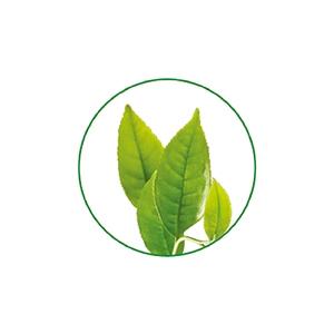Tinh chất trà xanh chống oxy hóa
